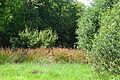 Buttermoor-Butterbargsmoor 07.JPG