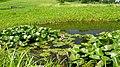 Bydgoszcz Myślęcinek - Ogród Botaniczny - panoramio (1).jpg