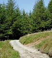 Byway to Strata Florida, Powys - geograph.org.uk - 1570671.jpg