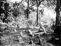 COLLECTIE TROPENMUSEUM Apen in het bos op de Apenberg bij Padang West-Sumatra TMnr 10006640.jpg