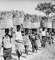 COLLECTIE TROPENMUSEUM Samo vrouwen dragen manden met parelgierst naar het dorp TMnr 20010515.jpg