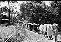 COLLECTIE TROPENMUSEUM Stoet tijdens een dodenfeest van de Toraja TMnr 10029399.jpg