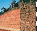 CSIRO ScienceImage 4535 Red Dermosol soil profile in the Atherton Tablelands north Queensland.jpg