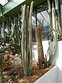 Cactees-Jardin-Plantes 07.JPG