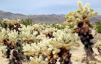 Cactus Forest.jpg