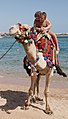 Camel on the beach 4.jpg