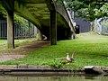 Canal Fields, Berkhamsted - geograph.org.uk - 1456571.jpg