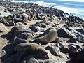 Cape Cross Seal Colony.jpg
