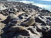 Cape Cross Seal Colony.jpg