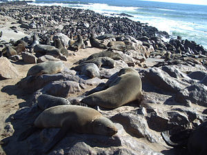 Cape Cross - Cape Cross Cape fur seal colony