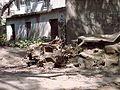 Caribe y Caraballeda diciembre 2000 029.jpg