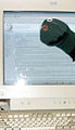Carlb-sockpuppet-wikipedia.jpg