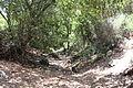 Carmel Park. Oren Wadi IMG 8922.JPG