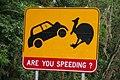 Cassowary road sign.jpg