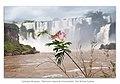 Cataratas del iguazu patrimonio natural de la humanidad - Diaz de vivar Gustavo.jpg