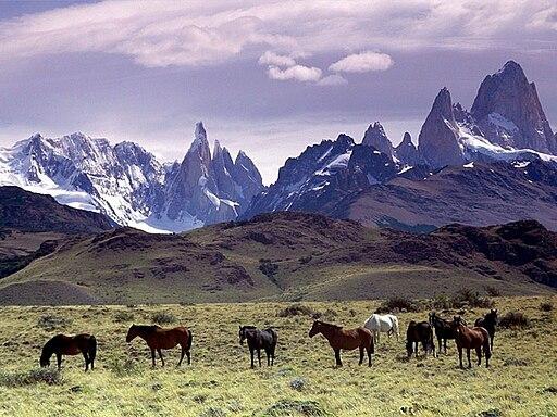 Cavalli Al Pascolo Ai Piedi Del Massiccio Del Fitz Roy, Patagonia