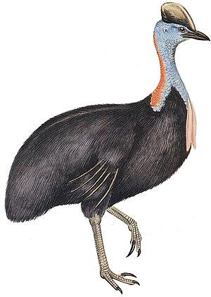 Bird - 50 px