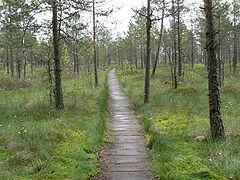 Cepkeliu swamps.jpg