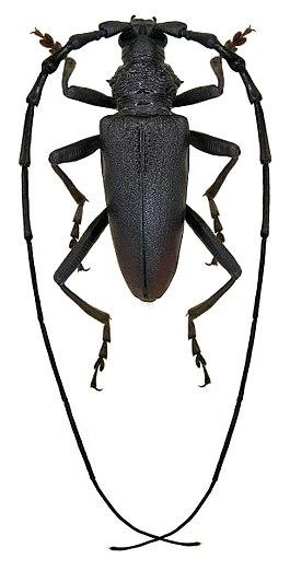 жуки подмосковья фото с названиями