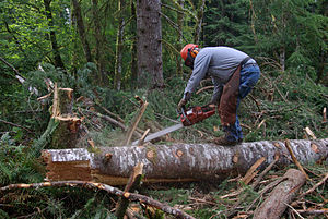 Chainsaw in use limbing a tree near Apiary See...
