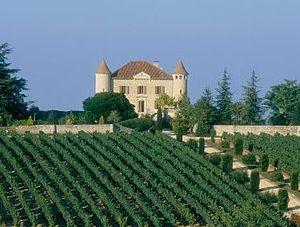 English: Chateau Chambert vineyard, Malbec vin...