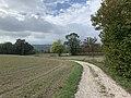 Chemin entre Montessuy et Billignin à Belley, octobre 2019 (1).jpg