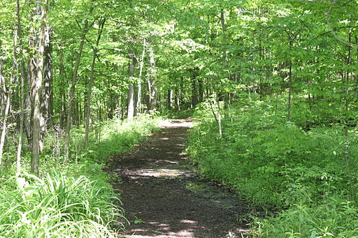 Cherry Hill Nature Preserve walking path