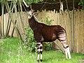 Chester Zoo (19278702299).jpg