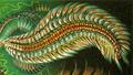 Chloeia viridis.png