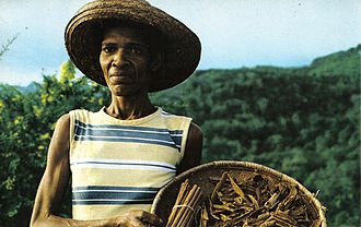 Agriculture in Seychelles - A cinnamon quill maker in Seychelles