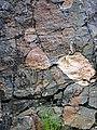 Clast-rich impact pseudotachylite (Sudbury Breccia, Paleoproterozoic, 1.85 Ga; Crab Lake South roadcut, south-southeast of Cartier, Ontario, Canada) 3 (46818330315).jpg