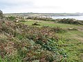 Coastal path towards Whitesands Bay - geograph.org.uk - 566740.jpg