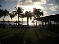 Coconut trees (4663672864).jpg