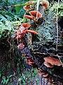 Cogumelos em seu habitat.jpg