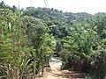 Colonia Policarpo Galindo, Roatan, Honduras C. A. - panoramio.jpg
