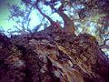 Contraste HD Arbol.jpg