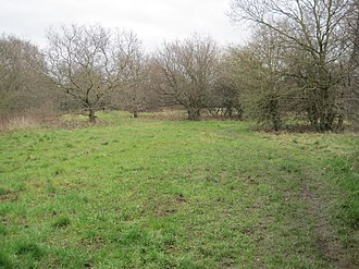 Copthall South Fields - Image: Copthall South Fields trees