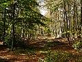Creech Woods - geograph.org.uk - 1021893.jpg