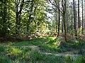 Creech Woods - geograph.org.uk - 1025137.jpg