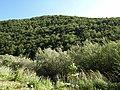Croatia P8134585 (3937380856).jpg