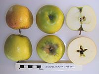 Cross section of Channel Beauty, National Fruit Collection (acc. 1922-097).jpg