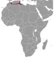 Ctenodactylus gundi range map.png