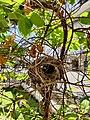 Cup Nest.jpg