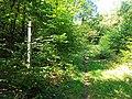 Czech Republic-Poland border, Opawskie Mountains 2020.09.08 16.jpg