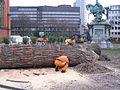 Düsseldorf, Martin-Luther-Platz, Abholzen von zwei alten Bäumen, 2012-02 (2).jpg