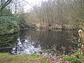 Dark Water Pond in Hall Wood - geograph.org.uk - 1178309.jpg