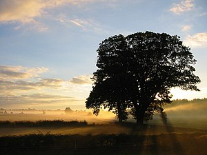 English: Dawn sunlight through early morning mist