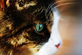 Depth of field-cats head.jpg