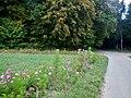 Der Herbst naht - panoramio.jpg