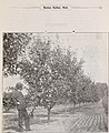 Descriptive catalogue - fruit plants, fruit trees, ornamental trees, shrubs and vines (1899) (20554793325).jpg
